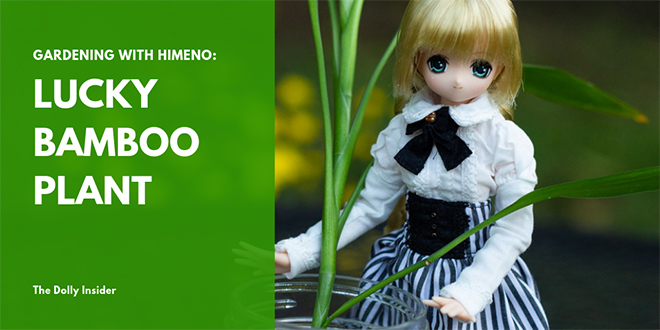 Gardening with Himeno: Lucky Bamboo Plant